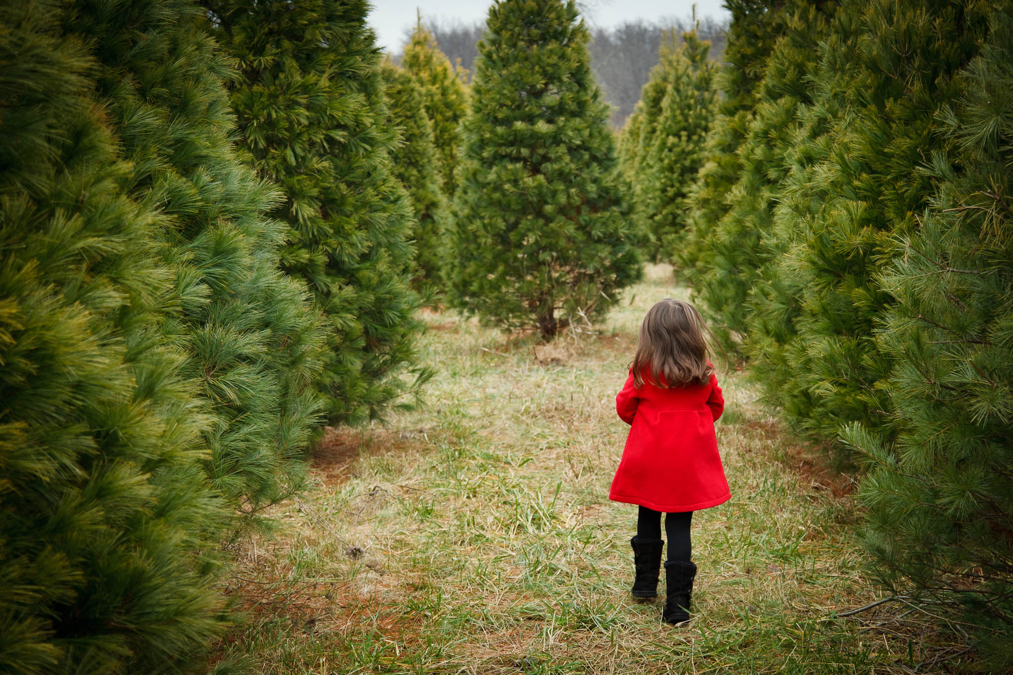 Rutland Christmas Tree Farm