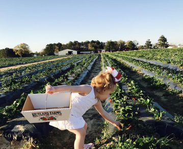 caroline strawberry picking